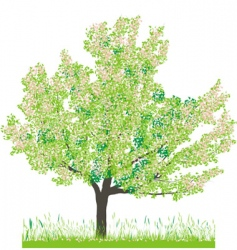 Cherry tree in spring vector