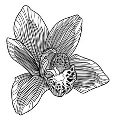 Exotic orchid drawing vector