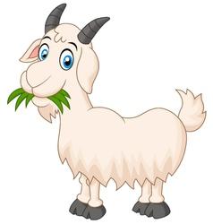 Cartoon goat eating grass vector