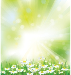 Spring background flowers vector
