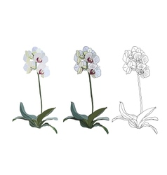 Orchid branch isolated on white background vector
