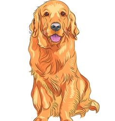 Smiling golden retriever gun dog vector