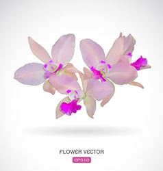 Image of orchid flower vector