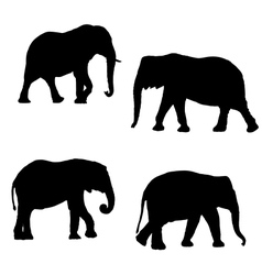 Silhouettes of elephants vector