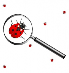 Magnifying glass with lady bugs vector