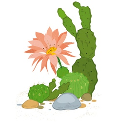 Hand drawn cactus blooms vector