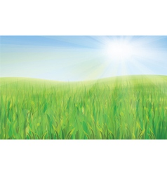 Sky green grass vector