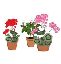 Flowering houseplants vector
