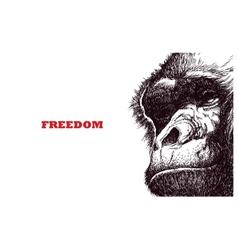 Head gorilla engraving style vector