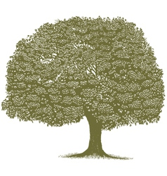 Woodcut tree vector