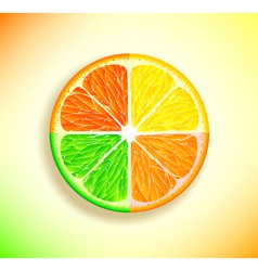 Lemon orange lime and grapefruit vector