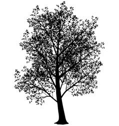 Silhouette of tree vector