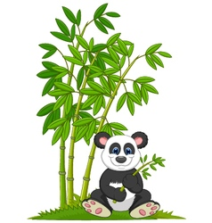 Cartoon panda sitting and eating bamboo vector