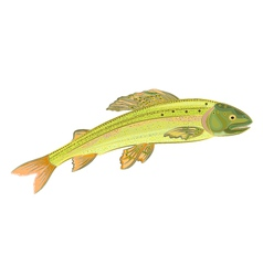 Grayling-salmon vector