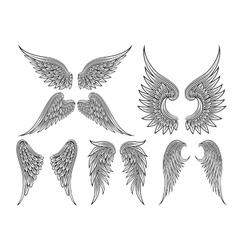 Heraldic wings or angel vector
