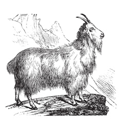 Wild goat vintage engraving vector