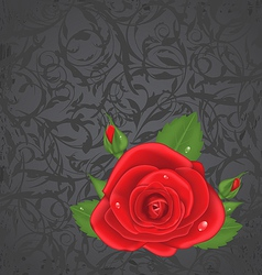Close-up red rose isolated on grunge floral back vector