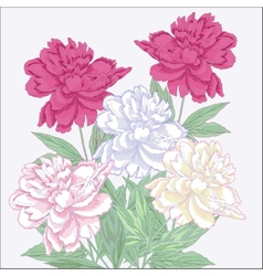 Bouquet with white and pink peonies vector
