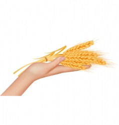 Hand with ears of wheat vector