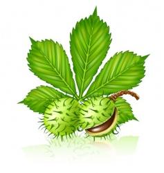 Chestnut vector
