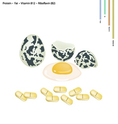 Quail eggs with protein fat vitamin b12 and b2 vector
