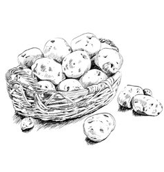 Potatoes scetch in a basket on white bsckground vector