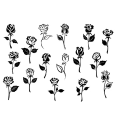 Black and white roses flowers vector