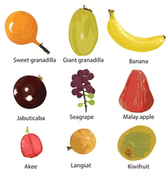 Set of different fruits vector