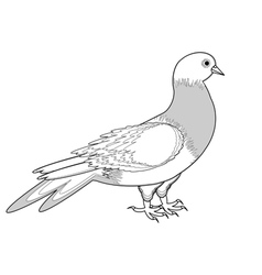 A monochrome sketch of a pigeon vector