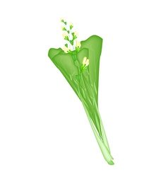 Fresh green mustard plant on a white background vector