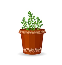 Thyme in a flower pot vector