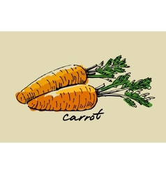 Hand drawn carrot vector