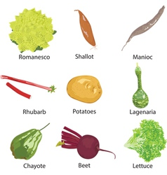 Different vegetables on a white background vector