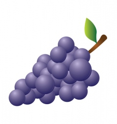 Grapes red vector