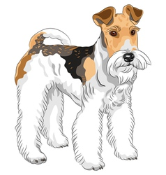 Dog wire fox terrier breed vector