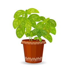 Fresh basil herb in a flower pot vector