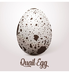 Realistic white egg with spots on light vector