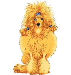 Color sketch of the dog red poodle breed vector