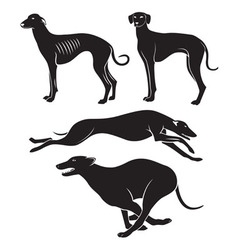 Hounds vector