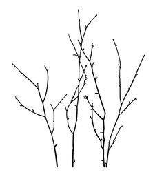 Branch silhouette vector