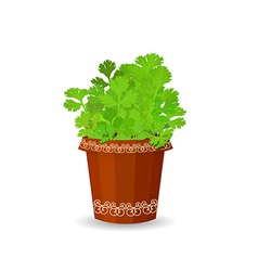Parsley in a flower pot vector