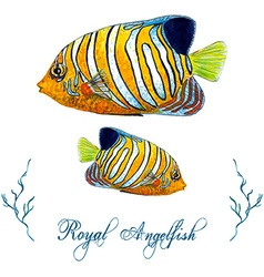 Royal angelfish vector