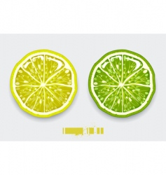 Lemon lime vector