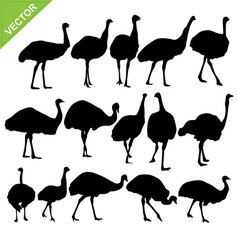 Ostrich silhouettes vector