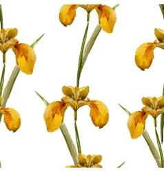 Iris flowers pattern vector