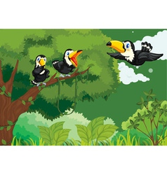 Toucans in the jungle vector