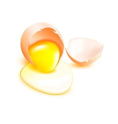 Brown broken egg with flowing yolk on white vector