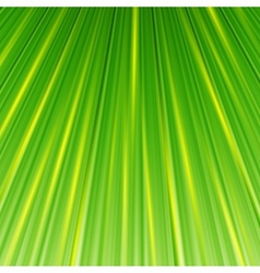Green magic abstract background vector