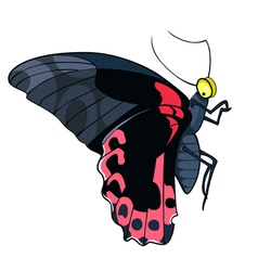 Butterfly black and red vector