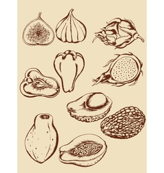 Vintage hand drawn tropical fruits vector
